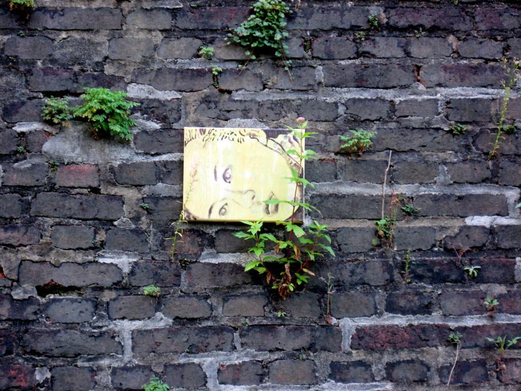 Polly auf der Steinmauer