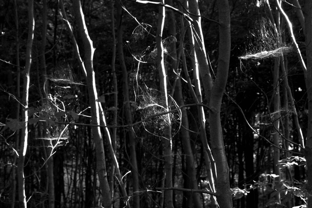 Wald spinnweben